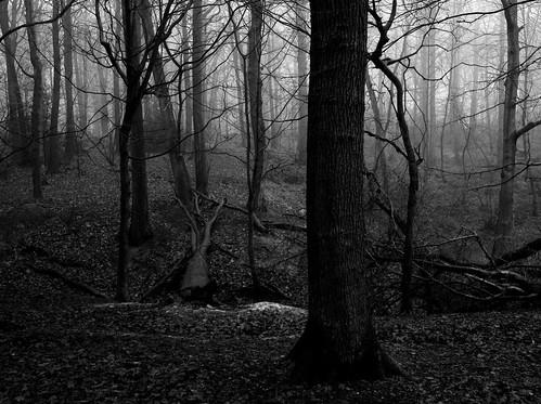 wood trees mist tree mono woods fujifilm wgc xpro1 sherrards 18mmf2 gor44