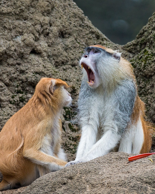 animals in zoos pros and cons