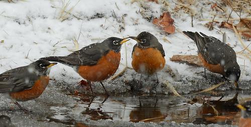 Social Robins