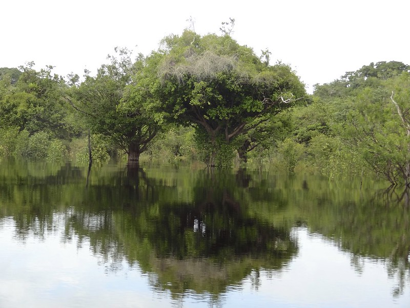 manaus-rio negro-amazon 94