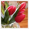 If I keep buying tulips will the hail and freezing winds go away?