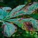 Blatt / Leaf