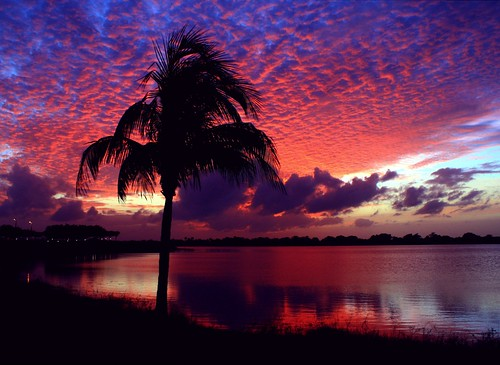 sunset red usa lake reflection fall nature beauty silhouette skyscape landscape colorful unitedstates natural florida horizon shoreline palmtree curve cloudscape levels firelight southflorida afterglow sawgrass naturephotography palmbeachcounty palmsunday lakescape coconutpalmtree glassywaters 112314 cloudtexture quartasunsetgroupcoverphoto artisticsunsetphotography quartasunset249 groupcover121614
