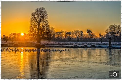 park england lake sunrise frost unitedkingdom bushypark hamptonwick