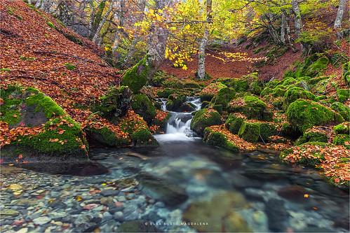 naturaleza hojas agua paisaje otoño león piedras poza hayedo argovejo crémenes riochín pitusa2 elsabustomagdalena