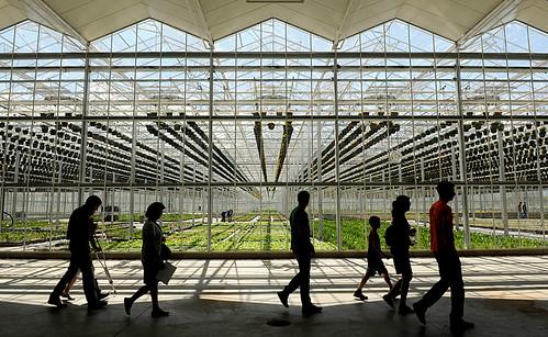 rainbow greenhouses open house.0412