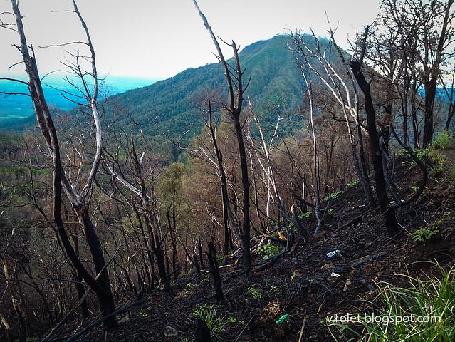 Ijen Crater pohon terbakar1-054914rw
