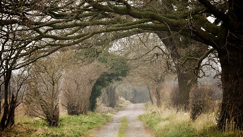 Tree lined lane..