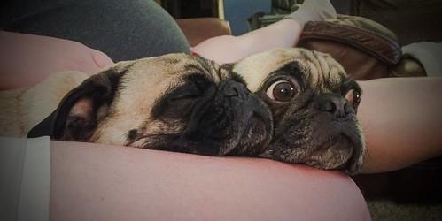 good pillow 1