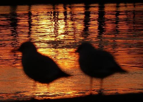 light sunset shadow germany de fire licht sonnenuntergang bremen feuer lightshadow lichtschatten sonnenunterganganderweser sunsetattheriverweser