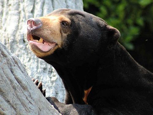 修訂後的野生動物保護法將有助於保護中國的野生動物。圖片來源: Kenno McDonnell