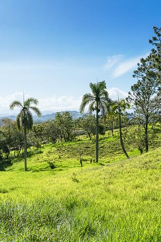 weide pflanzen wolken landschaft lavega palmen karibik hatillo dominikanischerepublik nordamerika cordilleracentral königspalme