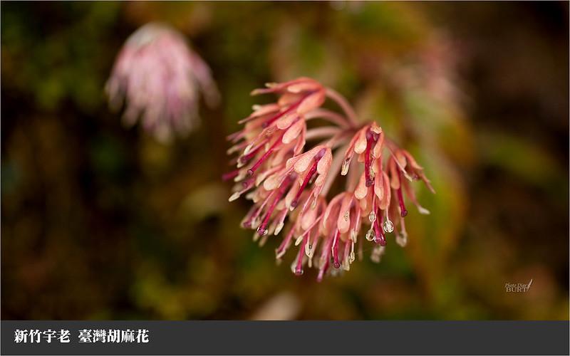 臺灣胡麻花