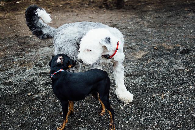 dogpark (7 of 8)