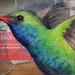 Hummingbird Bank of America by PS pics