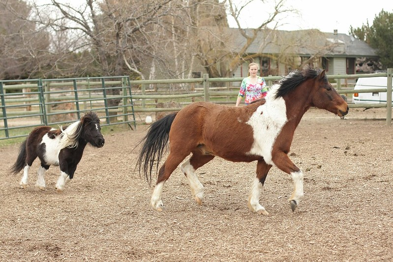 new pony and LuLu