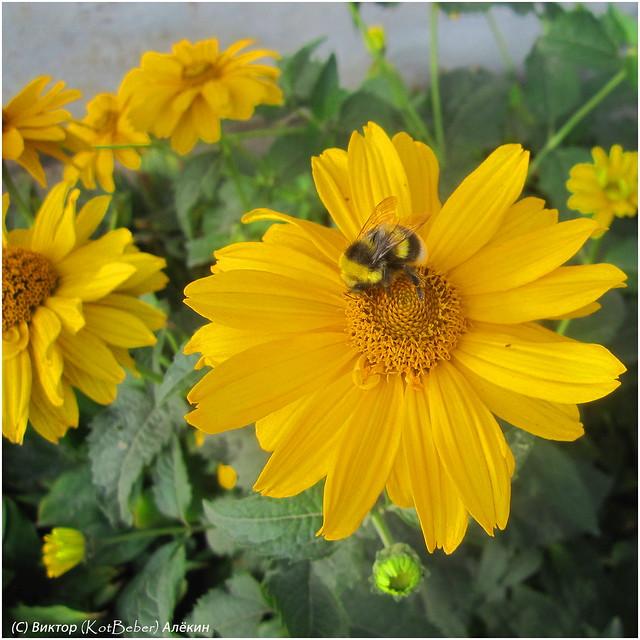 Городские цветы, Canon DIGITAL IXUS 120 IS
