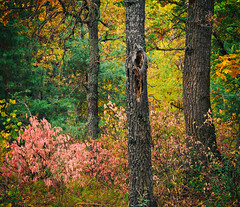 Colors of autumn_III