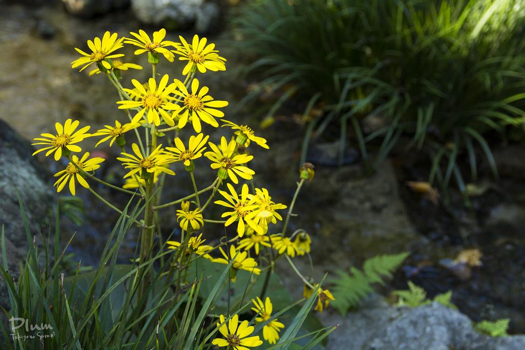 Shirotori Garden-33