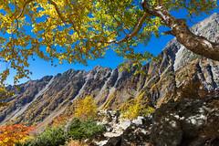 ダケカンバの紅葉と西穂高岳