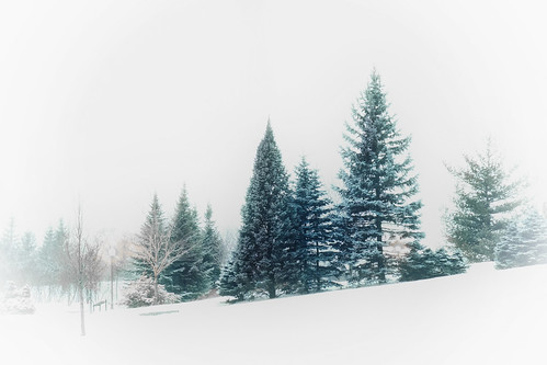 wood trees winter white snow cold green ice forest relax landscape outside frozen frost quiet peaceful scene fir fujifilm minimalism conifers firtree winterscene maizerets fujixt1 softgraphic