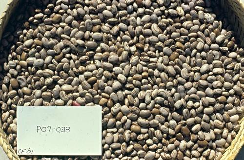 P09-033 CF01 S
