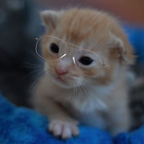 Lovell_Glasses