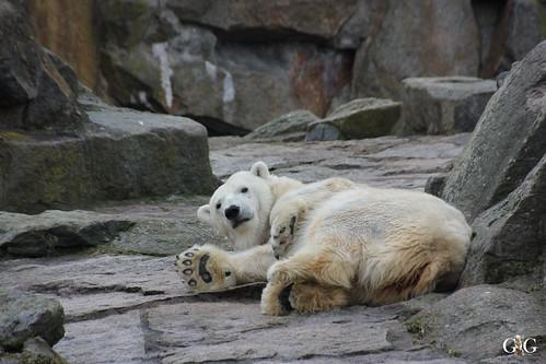 Berliner Zoo 22.02.201511