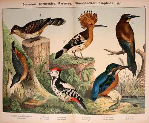 008-Natural history of the animal kingdom for the use of young people..- 1889-William Forsell Kirby