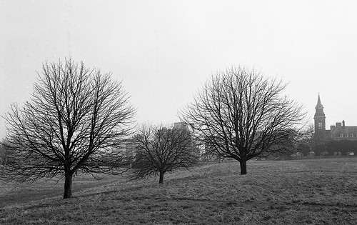 Three Trees, The Royal Hospital Kilmainham