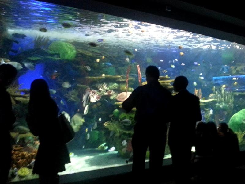 Ripleys Aquarium
