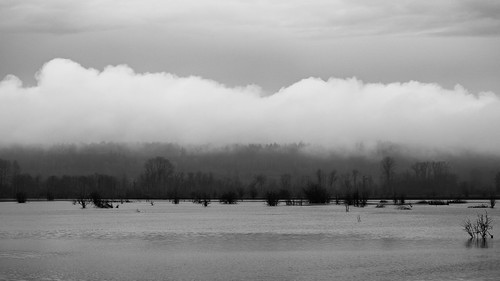 trees blackandwhite nature water monochrome clouds contrast landscape outdoors washington scenic pacificnorthwest marsh canonef100400mmf4556lisusm nisquallynationalwildliferefuge canoneos5dmarkiii johnwestrock