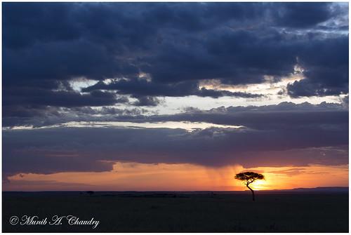 sunset kenya ngc lonetree magicalsunset maasaimaragamereserve macswildpixels