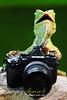 Lizard the photographer