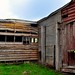 old timber shearing shed walls by holly hop