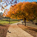 Small photo of Fall Colors at Almaden Lake Park
