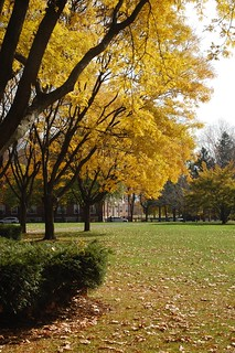 Fall Foliage in Harvard Square, Cambridge