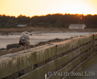 fort clinch pier - val in real life