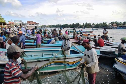 172 Fish Market Chilaw (18)