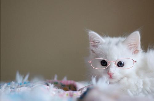 Linus_glasses