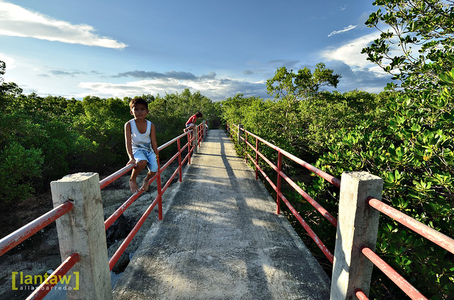 Bridge by the Mangrove forest