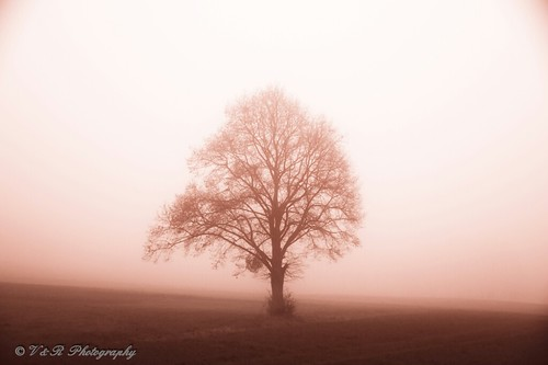 autumn trees winter fall nature fog landscape photography photo nikon photographer view photos ngc explore soe excapture nikonflickraward nikond3300 onlythebestofnature