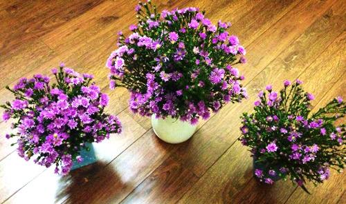 Trang trí nội thất bằng hoa cho ngày tết - Phần 3