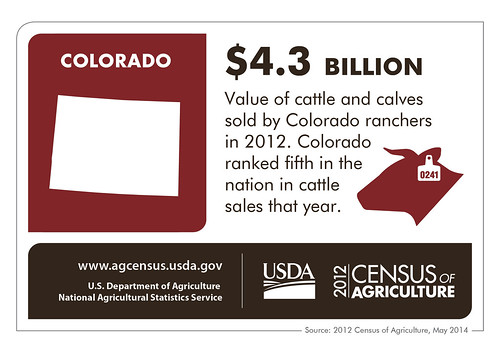 Cattle is Colorado's #1 commodity – check back next Thursday to learn more about another state and the results from the 2012 Census of Agriculture!