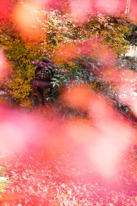 秋に包まれる