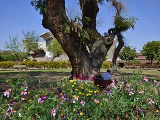 Peshawar In Bloom - Springtime in The Gardens of Gor Khatri, the City of Peshawar, Khyber Pakhtunkhwa, Pakistan - March 2014