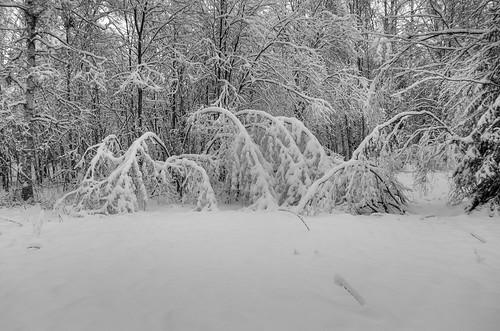 winter blackandwhite bw snow tree suomi finland blackwhite vinter forrest talvi vasa ostrobothnia