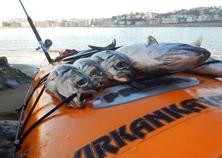 Buena temporada de pesca en la costa cantábrica.