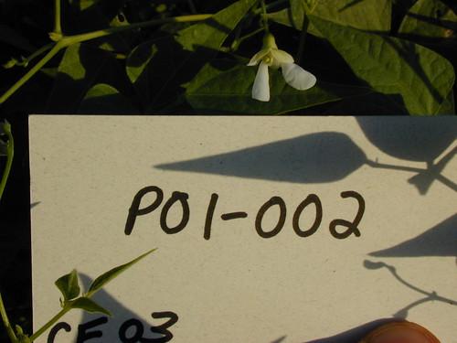 P01-002 CF03Fl