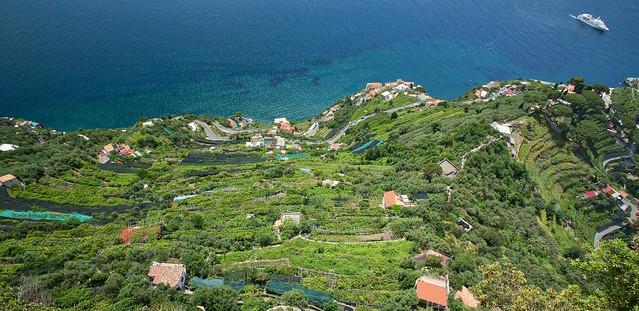 #AmalfiCoast and the terraced lemon